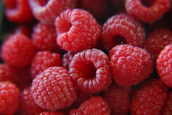 https___upload.wikimedia.org_wikipedia_commons_4_49_fresh_raspberries_(272567650)